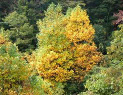 秋の定点観測