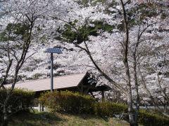 高瀬湖の桜