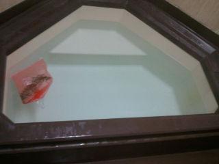 ローズマリーの風呂