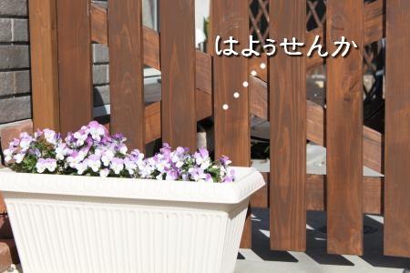 IMG_1549_convert_20100204211528-1.jpg
