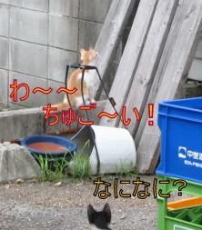 IMG_4384.jpg