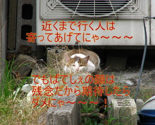IMG_5380-1.jpg