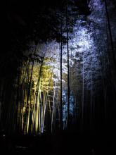 arashiyama10_takeyabu.jpg