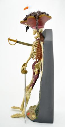 p-o-c-skull-span-05.jpg