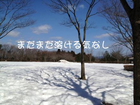 1303174.jpg