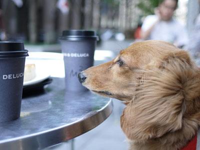 cafe_124.jpg