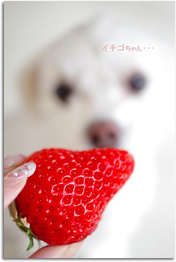 イチゴちゃん