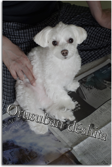 Orusuban。