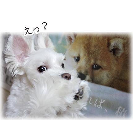 犬とアン1