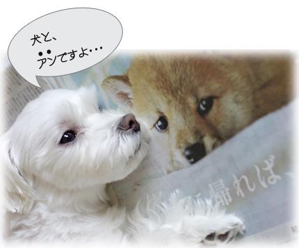 犬とアン2