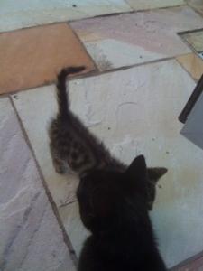 CAT11.jpg