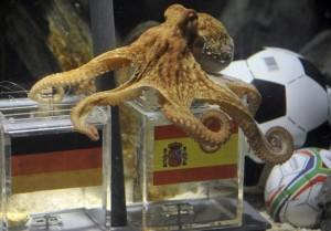 paul-the-octopus-fifa-world-cup-winner-300x209.jpg
