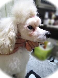 2010.4.21-2 子犬