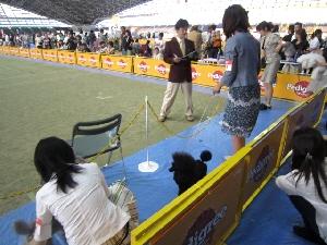 静岡東プードルクラブ展