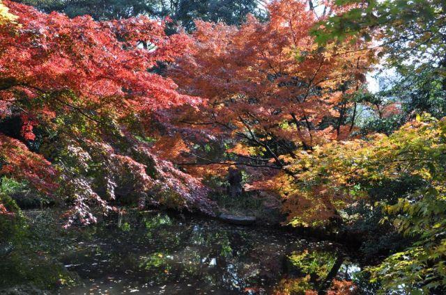 10.11.27新江戸川公園_253_800_640