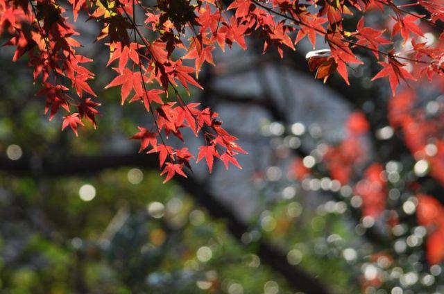 10.11.27新江戸川公園_273_800_640
