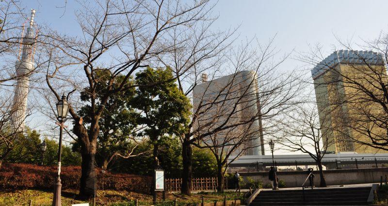 11.1.26wツリー対岸_37_800