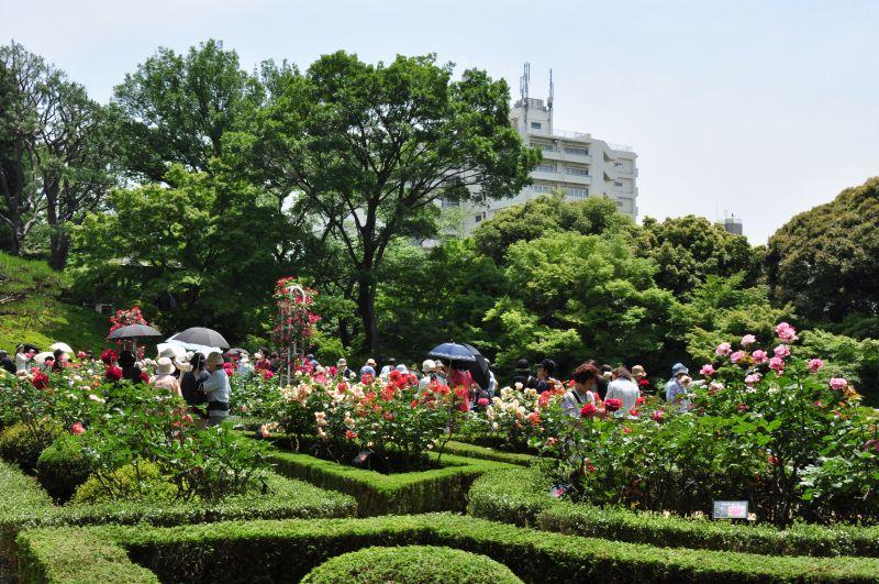 11.5.25古河庭園バラフェス_033_800