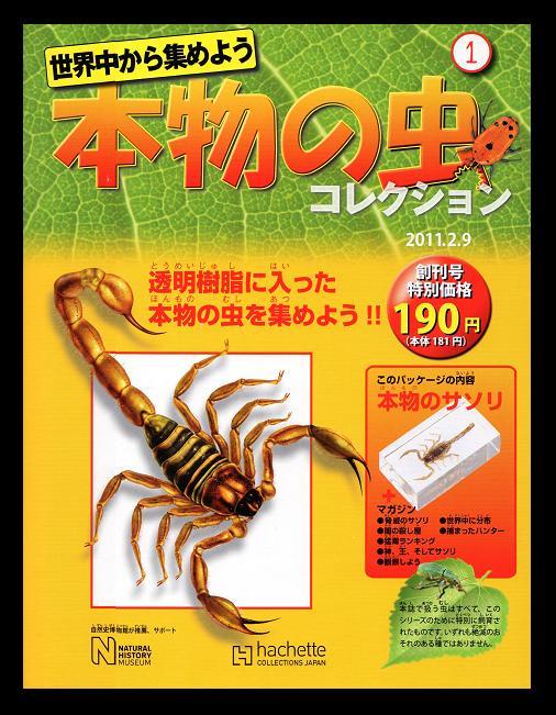 世界中から集めよう 本物の虫コレクションNo,1