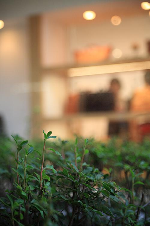 Canon EOS 5D (軽井沢)