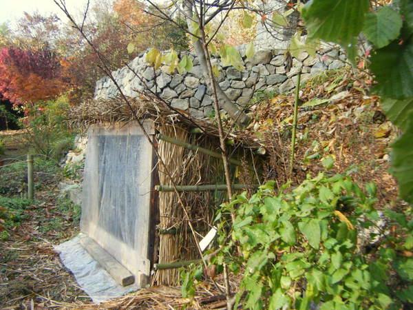ネギ小屋6