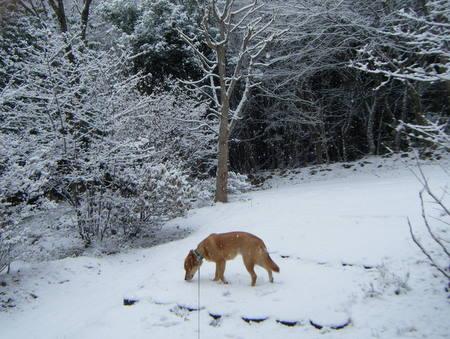 雪散歩玄関アプローチ