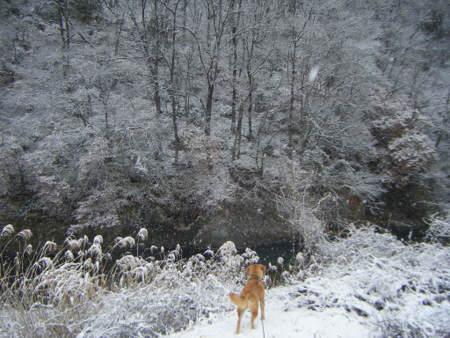 岸壁の雪景色