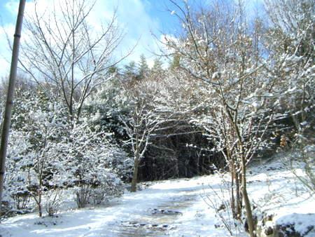 雪掃きの朝、玄関アプローチ