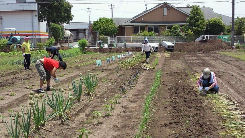 大刀洗農業風景