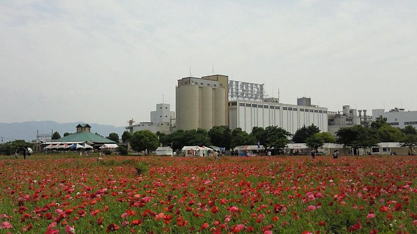 大刀洗キリン工場ポピー幻想