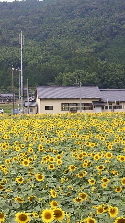 向日葵と犀川崎山公民館