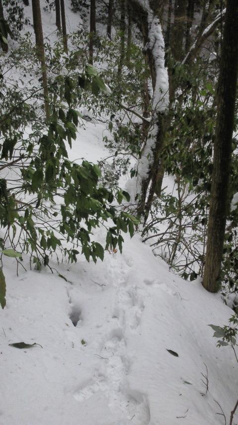 足跡の無い雪道は迷いそう