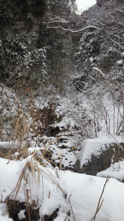 昨日の吹雪で積もってます。