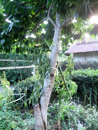 2011.9.22 台風15号通過 021 (1)