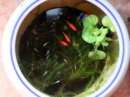 2011.9.27 庭の水槽 017 (2)