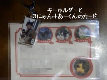 nobi8nさんからのメッセージカード