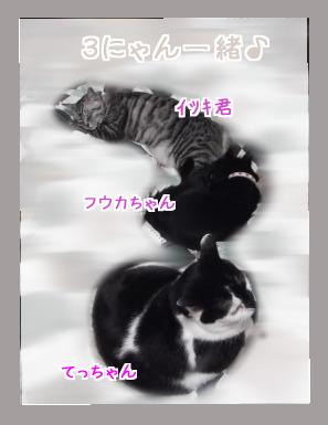 3にゃん奇跡の1枚☆