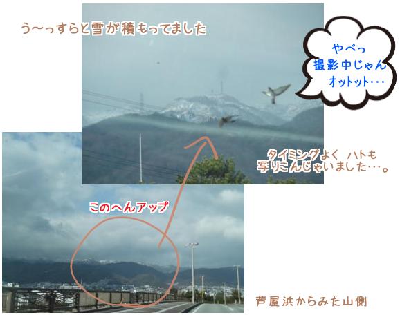 山と積雪とハト