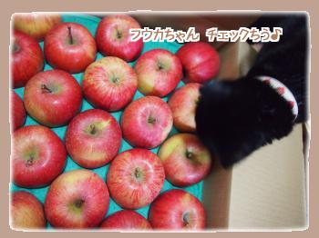 フウカちゃんリンゴをチェック中♪