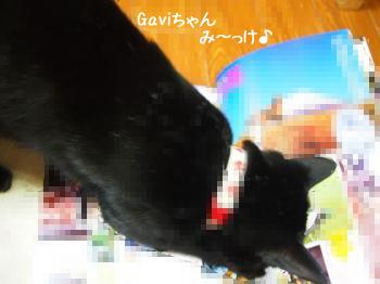 Gaviちゃん いーっぱいでーちゅ♪