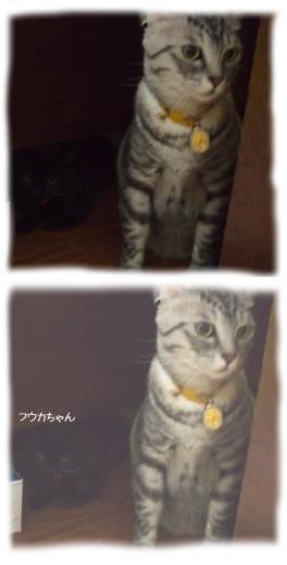 怯える猫さんたち