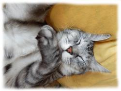 イツキくんの寝顔