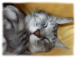 カワイイ寝顔❤