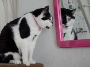 鏡をのぞきこむ