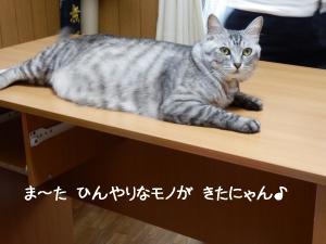 ヤジ猫 イツキくん