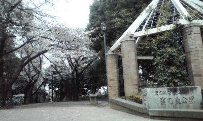 窪町東公園、桜 100328_1705~01
