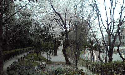 窪町東公園、桜 100328_1707~01