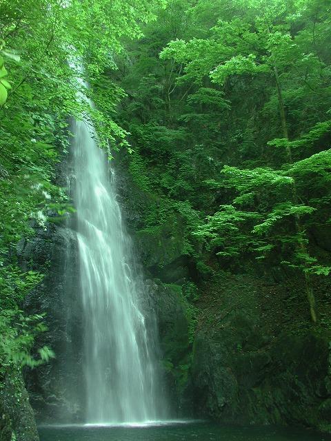 川乗岳、百尋の滝、木、林道工事0033.01s-640