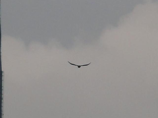 DSC03777 2010-05-11