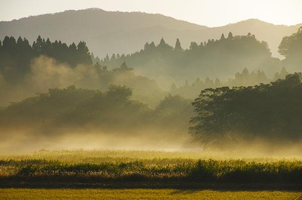 東和町の朝霧